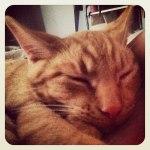 Ferocious Fred the sleepy kitty cat