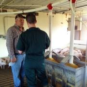 Wastell hog farmer 3