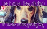 Love is patient. Even with Dogs. Or, Lessons I Learned from Dog Barf.