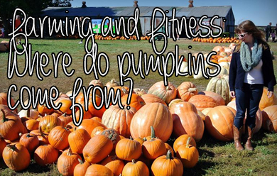 Where do pumpkins come from? How are they grown?