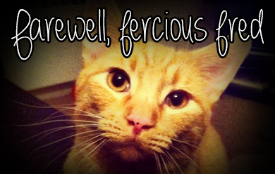 saying goodbye to pets - farewell ferocious fred