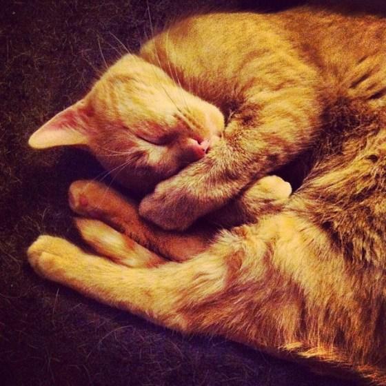 world's cutest cat